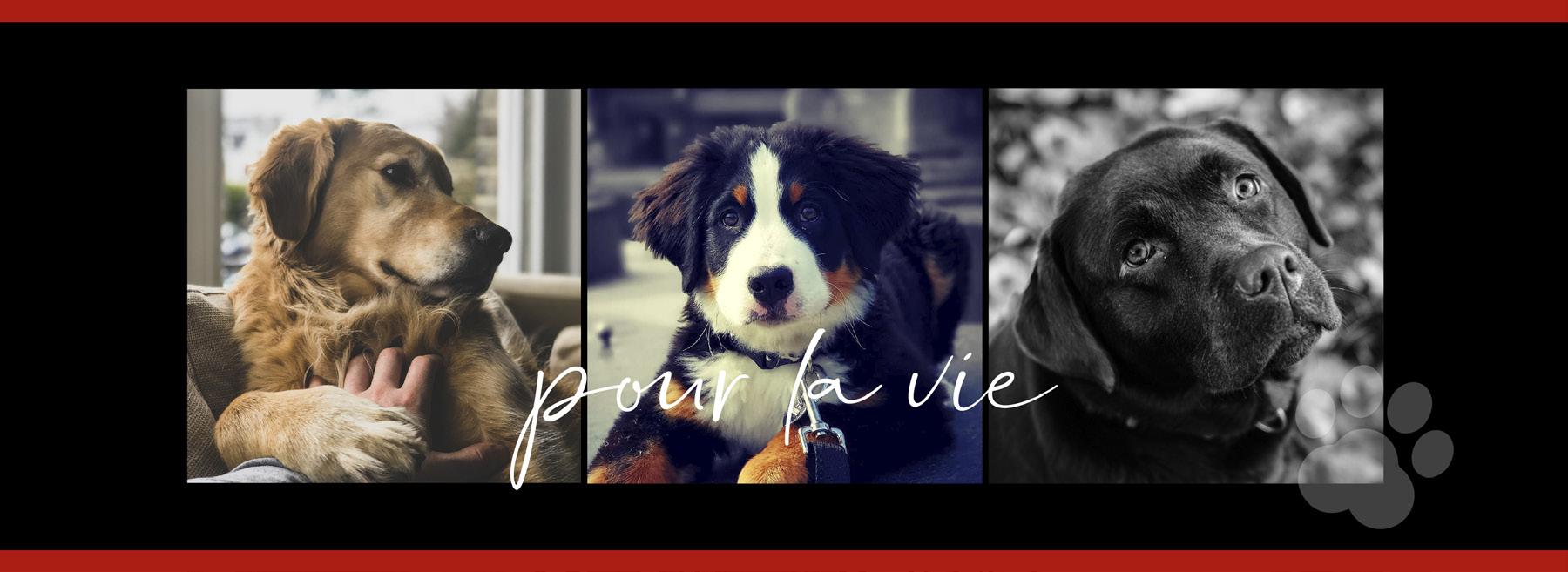 L'Académie Stella et les chiens d'assistance en santé mentale